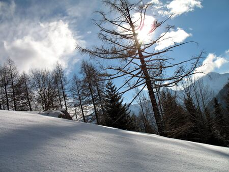 gusty: backlight winter landscape with snowy green firs