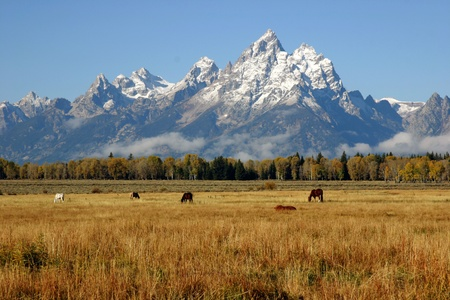 Many horses grazing below the Grand Tetons photo
