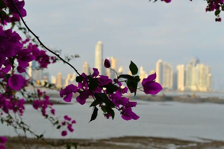 panama city: Panama city behind flowers
