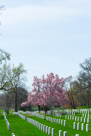 national military cemetery: The Arlington Cemetery is the US military cemetery in which soldiers who died in national conflicts since the Civil War are Buried. Stock Photo