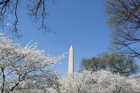 obelisk stone: The Washington Memorial was built to commemorate George Washington (The first USA president) and it is the biggest obelisk and the world largest stone structure. Stock Photo