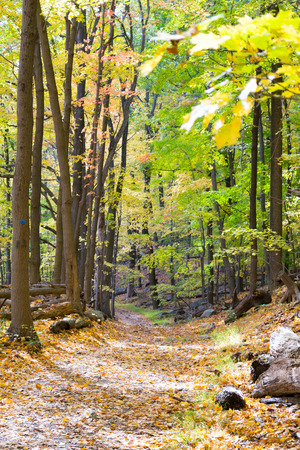senescence: Picture taken during a hike from Breakneck ridge to Cold Spring during the fall season NY