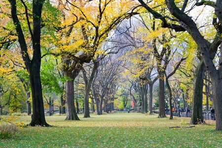 The Mall and Literary Walk in Central Park contains one of the bigest and last remains of American Elms Stock Photo