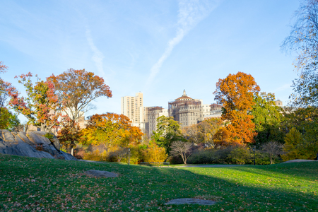 Lawn in Central Park by the Mount Sinai School of Medicine 版權商用圖片