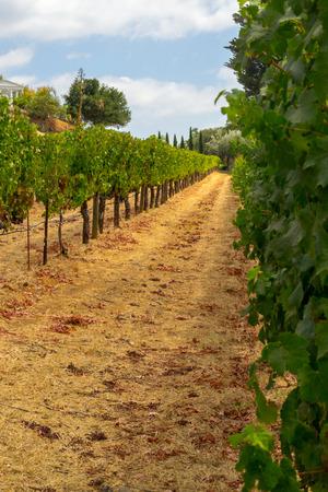 La vallée de Sonoma est mondialement connue pour ses vignobles