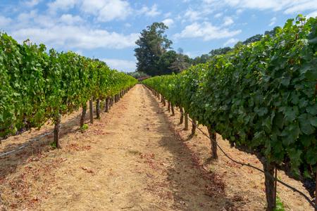 La vallée de Sonoma est mondialement connue pour ses vignobles Banque d'images