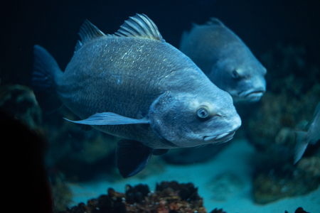 Group of blue fish in deep waters