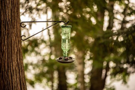 Hummingbird water dispenser hanging from a tree