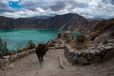 Mules in the Quilotoa volcano with its water-filled caldera (Ecuador)
