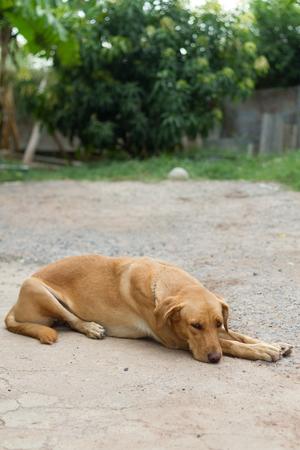 best shelter: dogs best friend of man