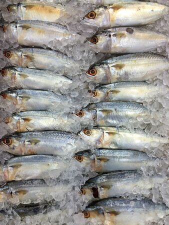 sell: Fresh mackerel sell in market. Stock Photo
