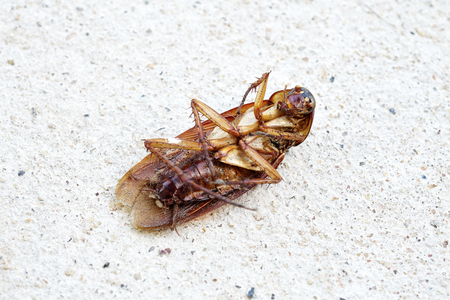 Dead cockroach on cement floor. Stock Photo