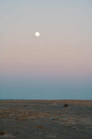 Moon rising at sunset on the beach