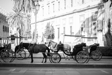 Horse in a street in Seville