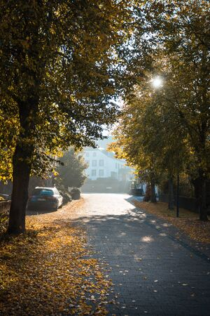 Avenue in autumn in a small village in Germany