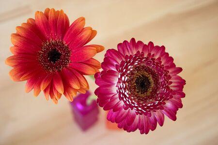 Two gerbera in a vase