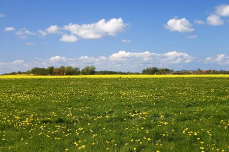 Green meadow with yellow flowers and blue sky with fluffy clouds Stock Photo