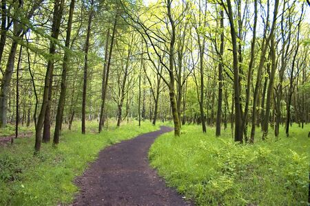 Curved path through wood in spring