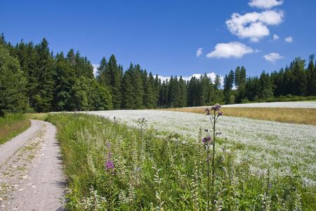 Rural landscape in the black forest low mountain range