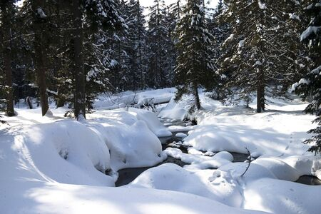 Brook flowing through a forest in winter