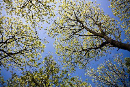 Trees overhead Stock Photo
