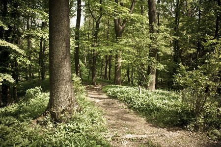 Footpath through a forest Stock Photo
