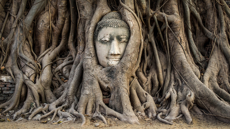 Head of Buddha Statue in the Tree Roots at Wat Mahathat, Ayutthaya, Thailand photo