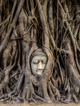 Head of Buddha Statue in the Tree Roots at Wat Mahathat, Ayutthaya, Thailand
