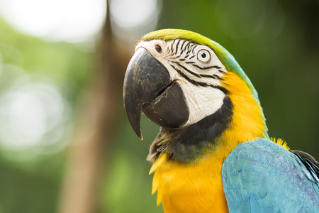 Closeup of God and Blue Macaw in Natural Setting Near Iguazu Falls, Foz do Igua?u, Brazil Stock Photo