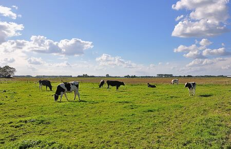 Sunny landscape with meadow, black and white cows, blue sky with clouds Stock Photo - 8729025