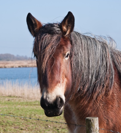 The picture shows the head of a brown horse with long black mane. In the foreground a barbed wire fence. In the background a little lake with blue water. photo