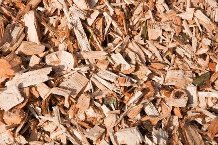 Woodchips from trees