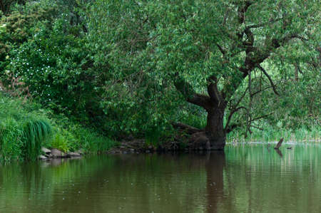 drimmelen: A very natural place in a National Park