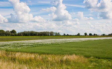 Colorful landscape in the Netherlands Stock Photo