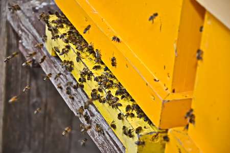 Closeup of the entrance of a yellow painted wooden bee hive photo