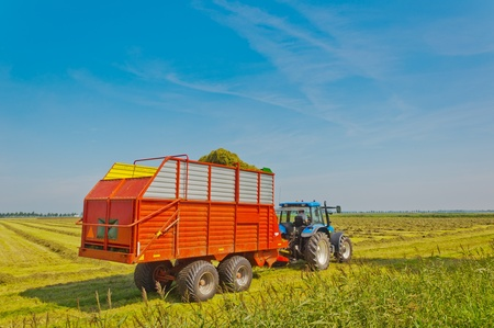 Collecting grass with the tractor and a silage wagon