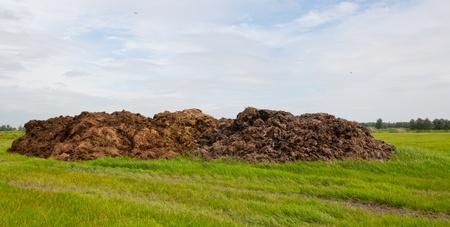 dung: Dung heap in a Dutch landscape