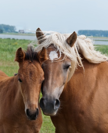 Together, duoportrait of a mare and her foal photo