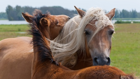 Umarmen Stute und ihr Fohlen in einer holländischen Landschaft entlang des Flusses Lizenzfreie Bilder