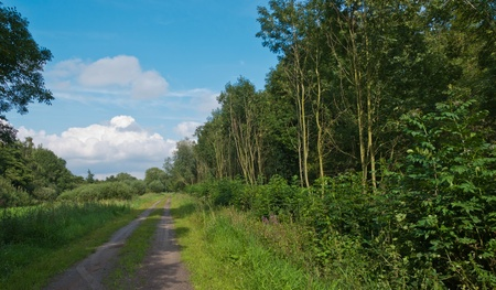 either: A sandy road in a Dutch natural area with trees on either side