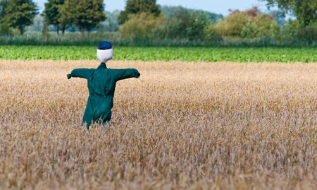 A green-clad scarecrow in a Dutch cornfield photo