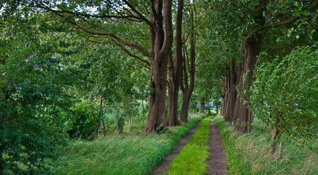 drimmelen: Sandy path between beech trees leading to an old Dutch cemetery