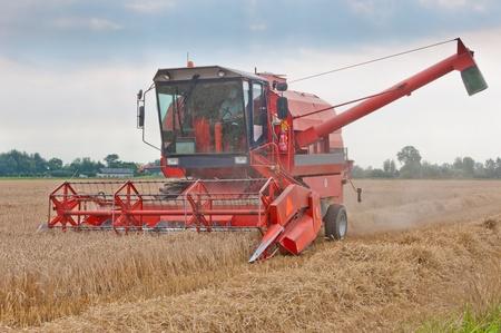 Die Verarbeitung des Getreides in einem Maisfeld von einem mächtigen Dreschmaschine
