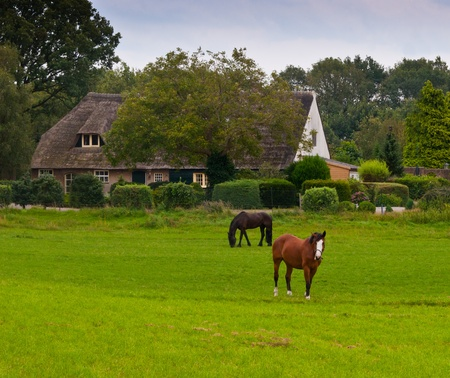Oosterhout, North-Brabant, Netherlands, August 21, 2011, Dutch farmhouse with a thatched roof and two horses in the foreground
