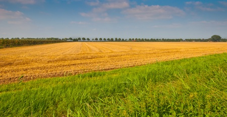Golden cornfield in the Netherlands after harvesting Stock Photo - 10394375