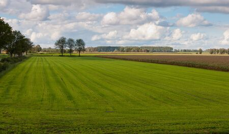 View over the colorful fields near the Dutch village of Drimmelen, North-Brabant Stock Photo - 10593533