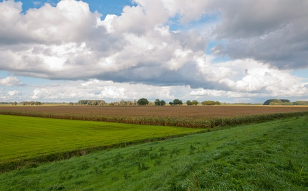 drimmelen: View over the colorful fields near the Dutch village of Drimmelen, North-Brabant Stock Photo