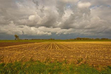 Niederländischen Landschaft nach der Ernte des Maises und kurz bevor es begonnen, regen Lizenzfreie Bilder