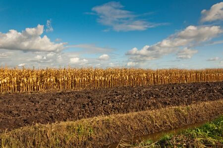 A colorful composition with golden maize, plowed field margins and a ditch