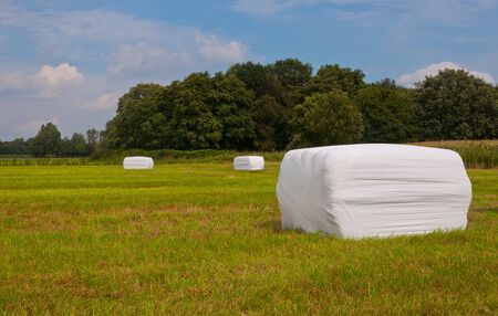Packages grass in a Dutch  field waiting for transport photo